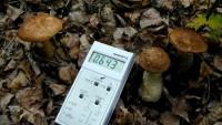 Проблемы возникающие в преодолении последствий катастрофы на ЧАЭС в Гомельской области
