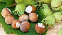 Жертвам рака кишечника помогут выжить лесные орехи