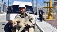 Продолжается проект Собаки Чернобыля