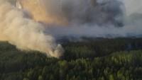 «Пожар в Чернобыльской зоне повысил радиационный фон в местном лесу в 10 раз»